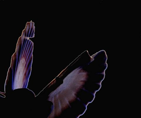 """Mostra online di Maria Luisa Runti: """"La favola magica"""" - 2. Gabbiano"""
