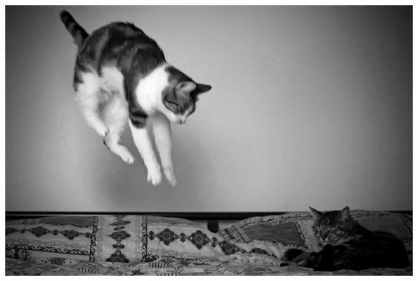 """Mostra online di Massimo Carolla """"Nun me fotografà!"""" - 7. Cats Rain"""