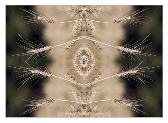 "Mostra online di Ombretta Ercolani ""Caleido Flowers"" – 5."