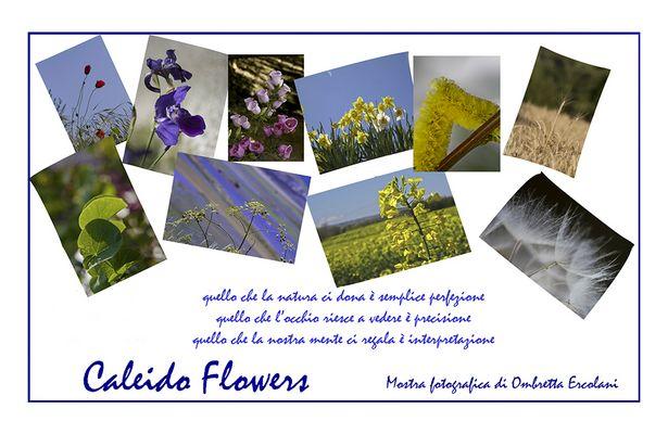 "Mostra online di Ombretta Ercolani ""Caleido Flowers"""