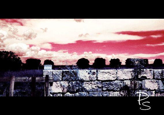 """Mostra online di Paola Stasi: """"Art&Nat"""" -  7. Questo è mio, quello è tuo"""