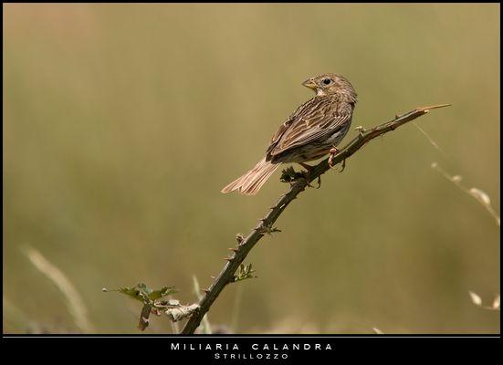 """Mostra online di Paola Tarozzi: """"Birds"""" -  1. Nel sole"""