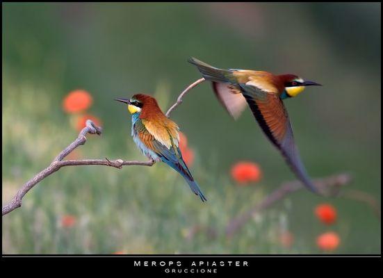"""Mostra online di Paola Tarozzi: """"Birds"""" - 10. Trionfo di colori"""