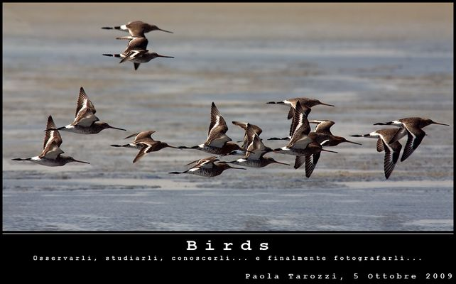 "Mostra online di Paola Tarozzi: ""Birds"""