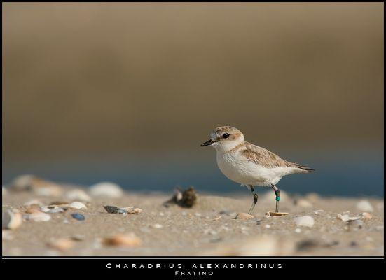 """Mostra online di Paola Tarozzi: """"Birds"""" -  2. Passeggiando sulla spiaggia"""