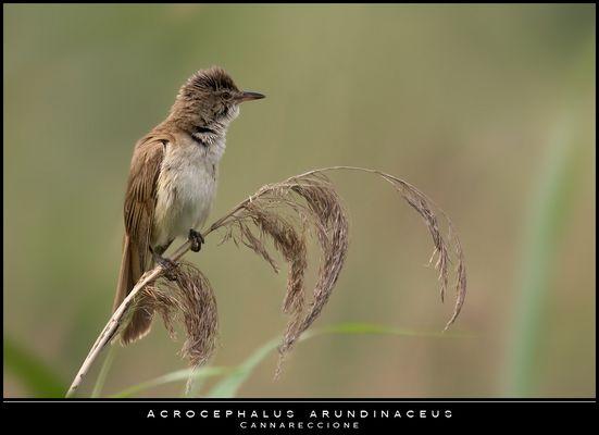"""Mostra online di Paola Tarozzi: """"Birds"""" -  3. Appena sveglio"""