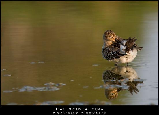 """Mostra online di Paola Tarozzi: """"Birds"""" -  4. Pulizie allo specchio"""