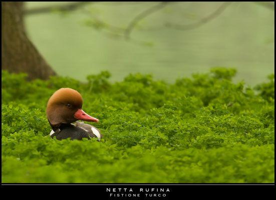 """Mostra online di Paola Tarozzi: """"Birds"""" - 5. Nel verde"""