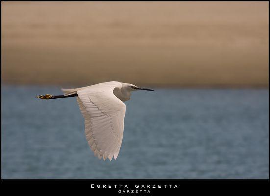 """Mostra online di Paola Tarozzi: """"Birds"""" - 6. In volo sulla spiaggia"""