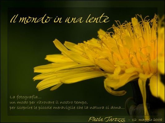 """Mostra online di Paola Tarozzi: """"Il mondo in una lente"""""""