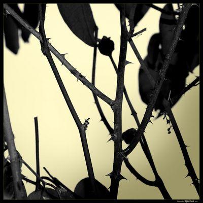 """Mostra online di Roberto Spizzico: """"Visioni"""" - 10."""