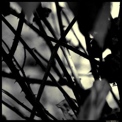 """Mostra online di Roberto Spizzico: """"Visioni"""" - 9."""