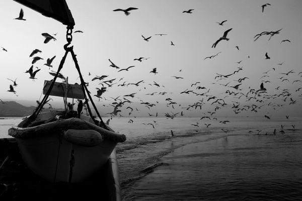 """Mostra online di Uta Theile """"L'arte della pesca nelle Cinque Terre"""" - 9. L'arrivo nel porto"""