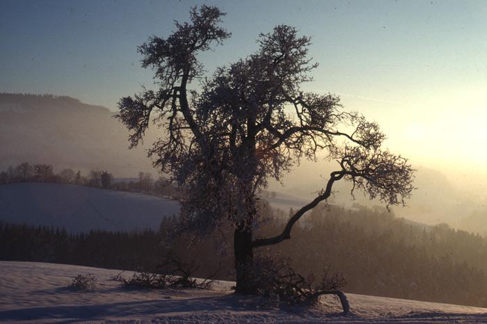 Mostviertler Winterlandschaft