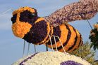 Motiv vom Blumencorso in Holland