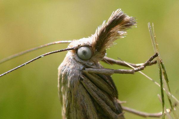 Motte oder Falter