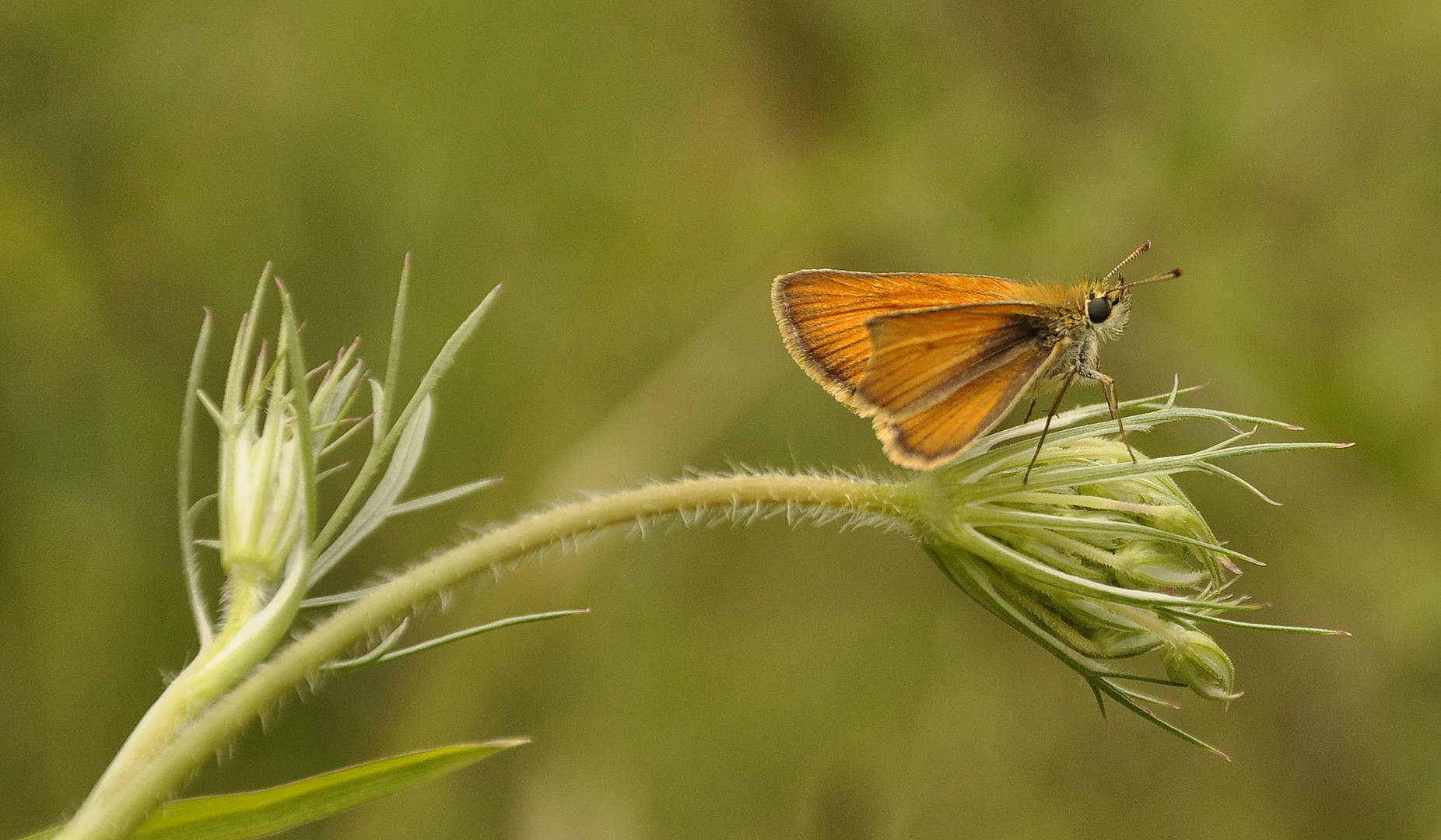 Motte oder Schmetterling?