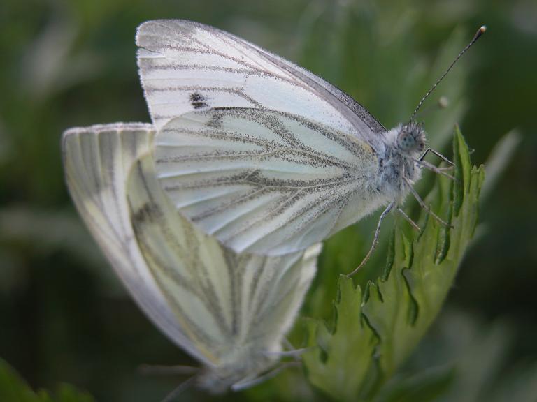 Motyle w euforii