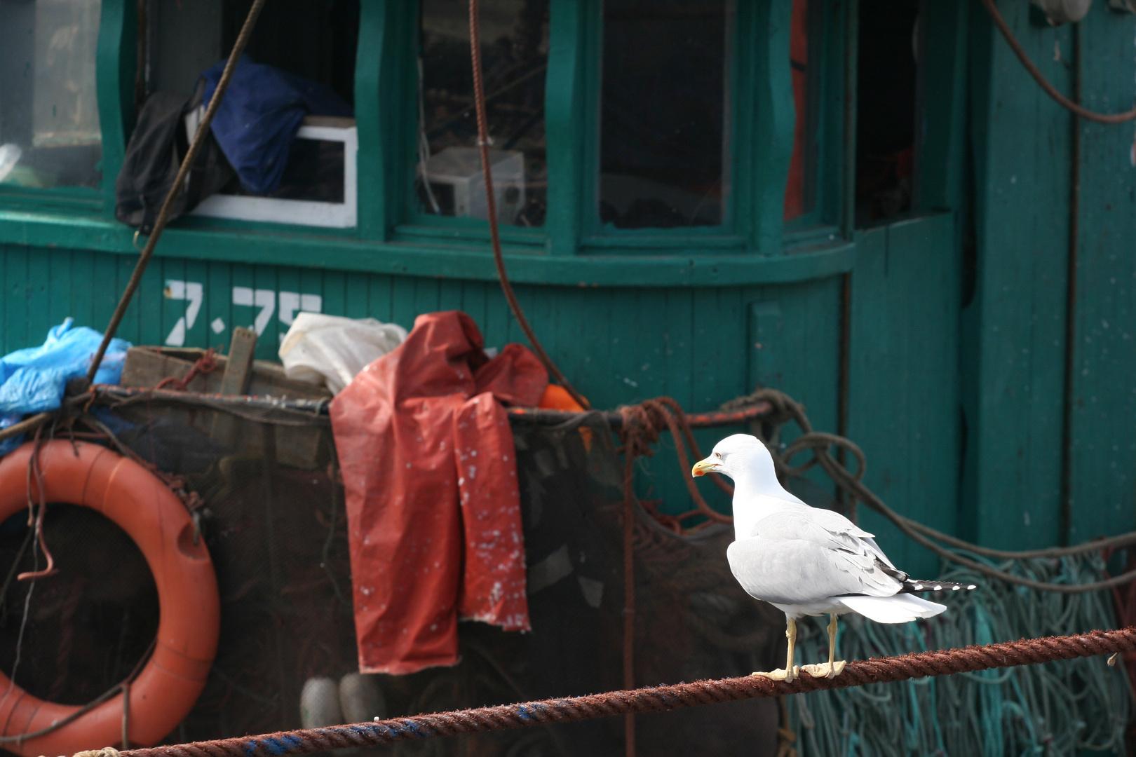 mouette au port