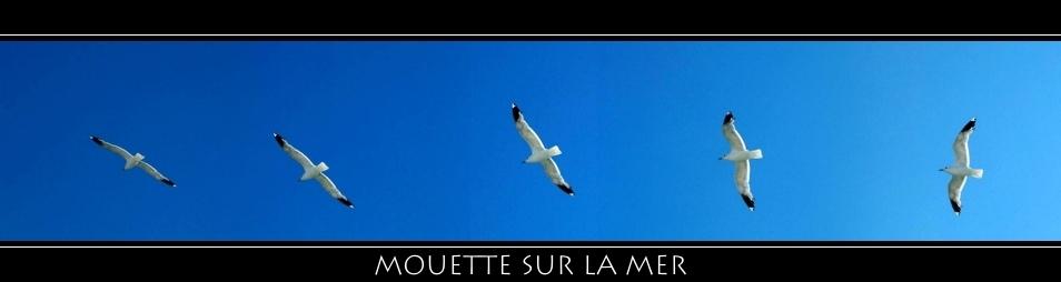 Mouette Sur La Mer