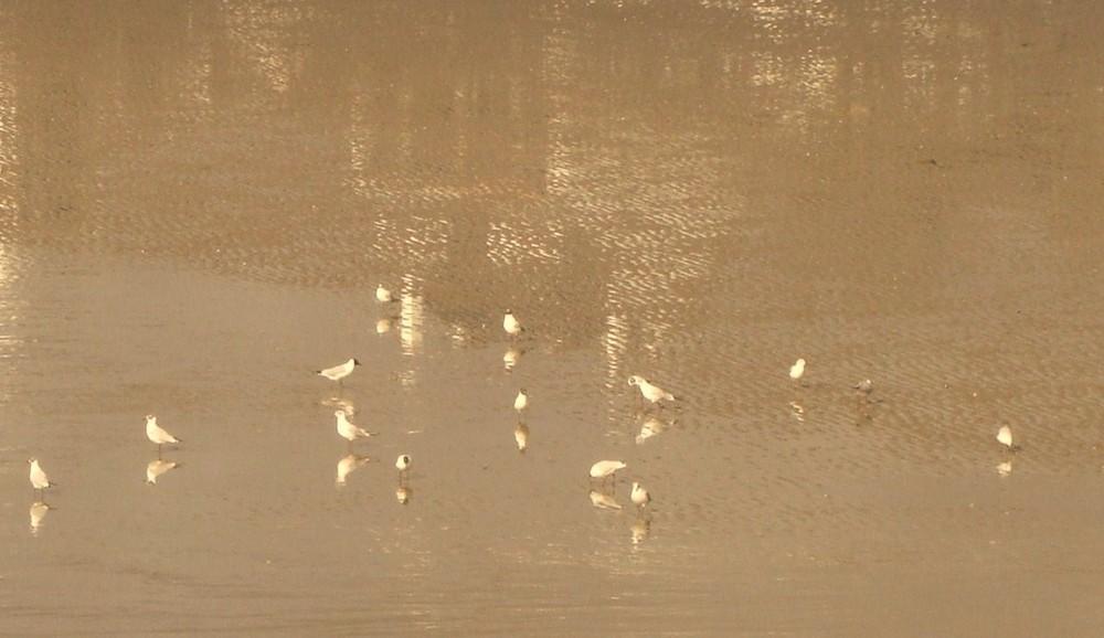 MOUETTES ---- seagull