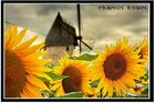moulin et tournesol