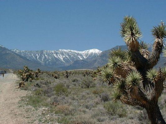 Mount Charleston - Las Vegas -  Nevada