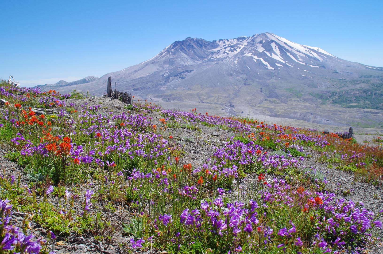 Mount St. Helens mal ohne Wolken aber im Dunst