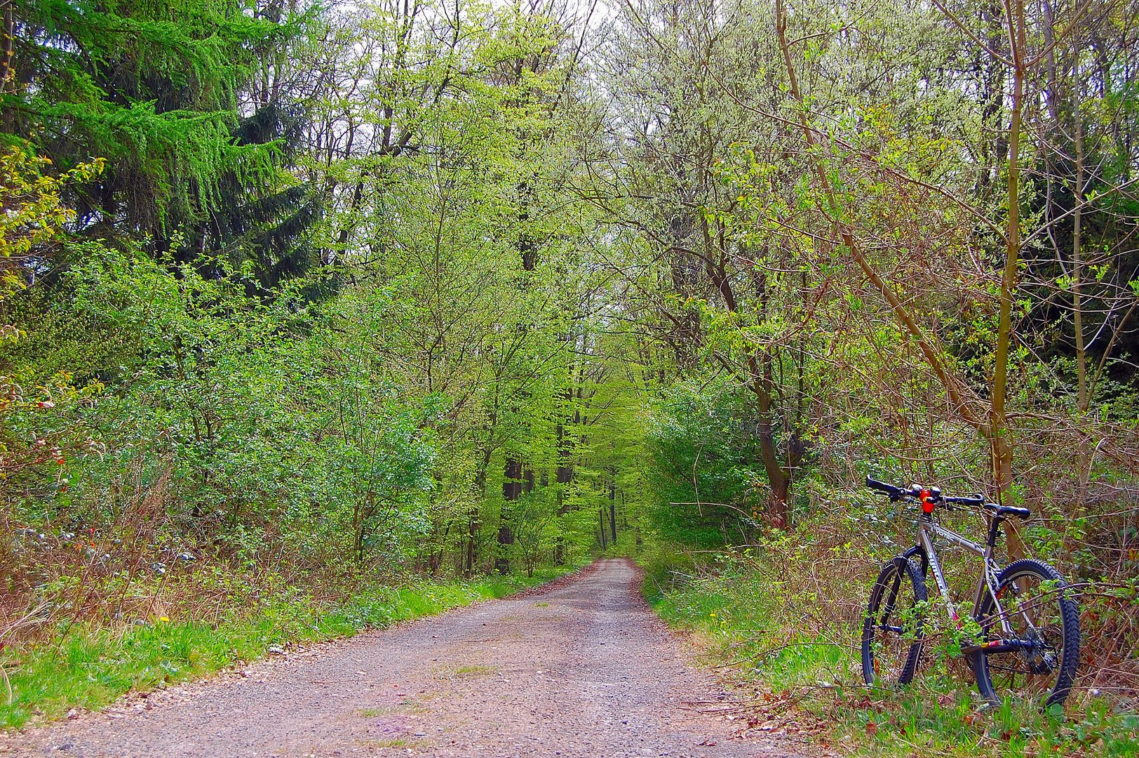 Mountainbike & Forststraße