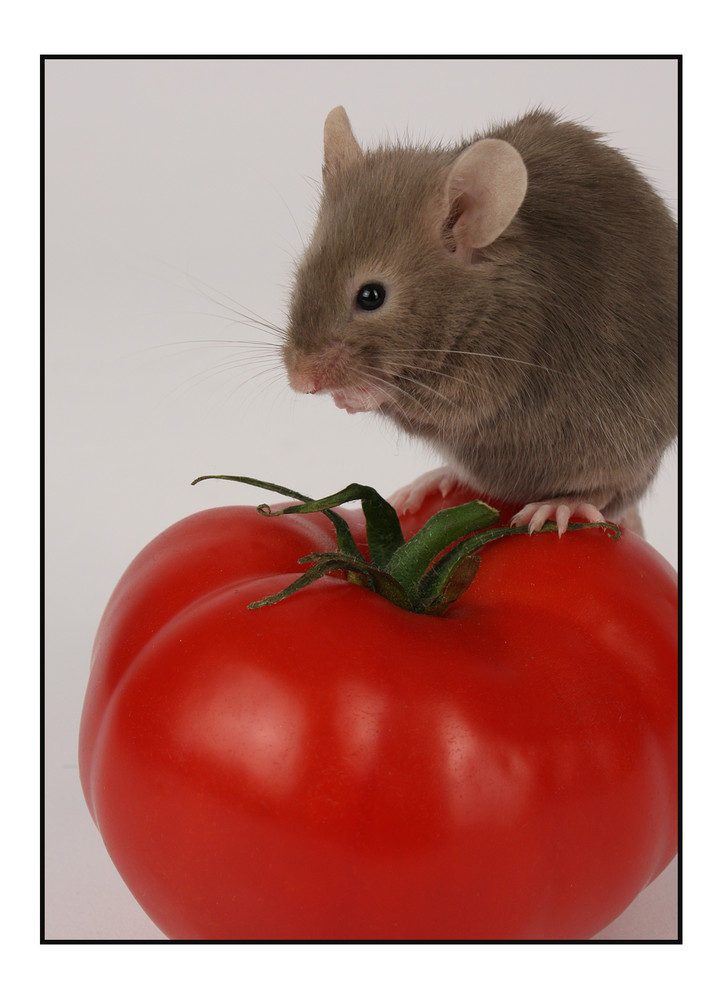 Mouse 'n' Tomato