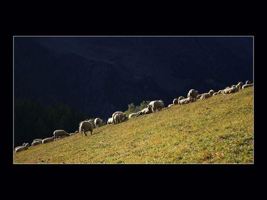 Moutons-Alpes