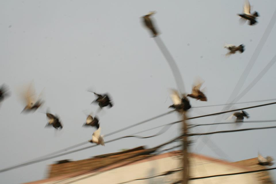 moviento palomas