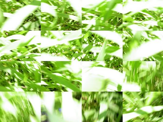 Moving - Grass