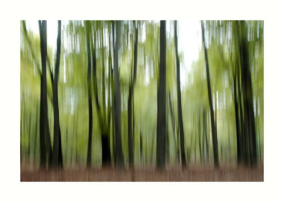Moving Trees #52