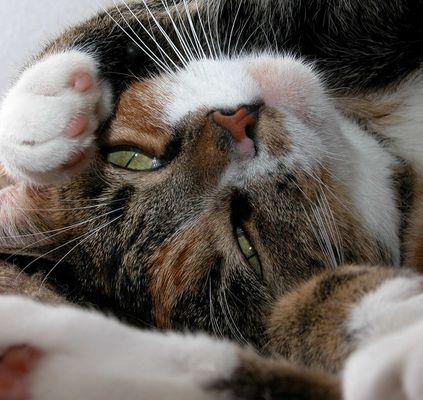 mozes, our cat