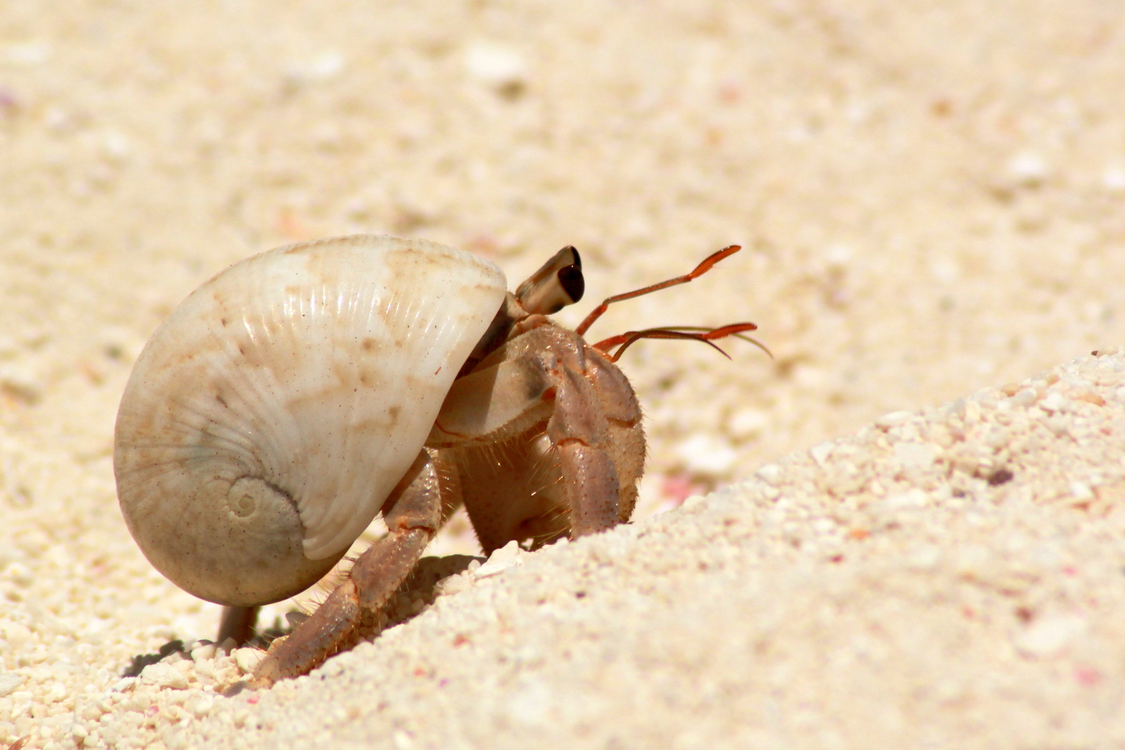 Mr. Crabs :-)