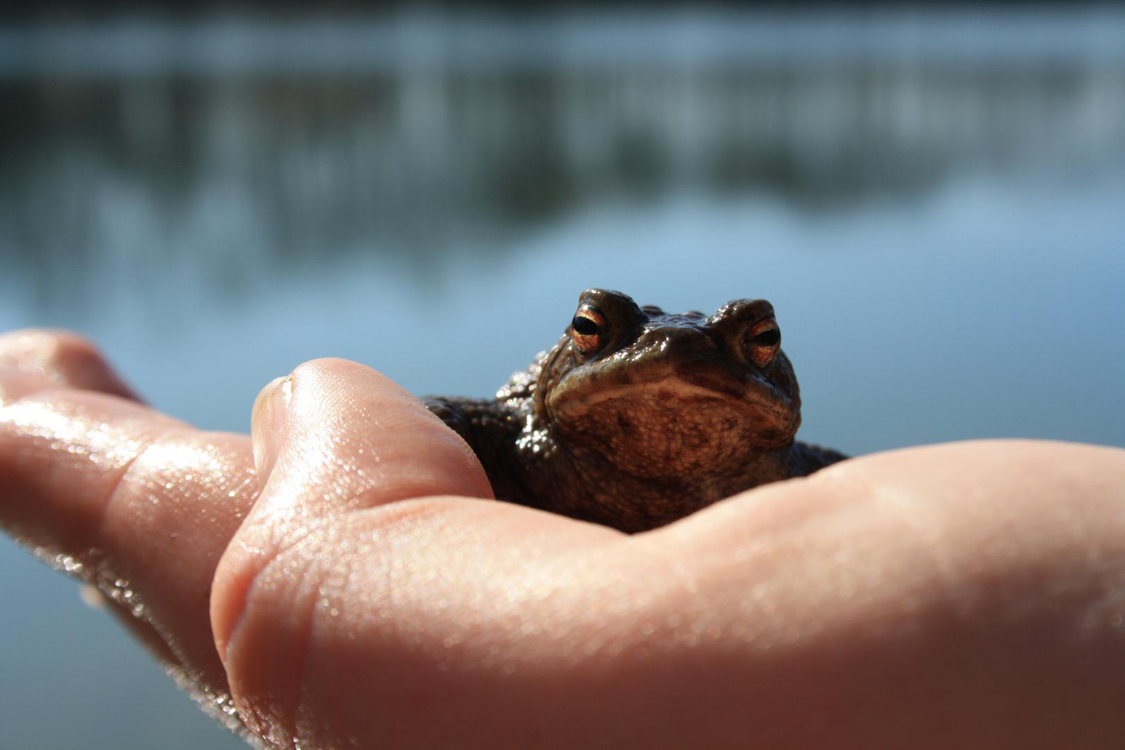 Mr. Frosch