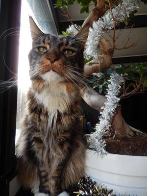 Mr Le Chat dans toute sa splendeur...