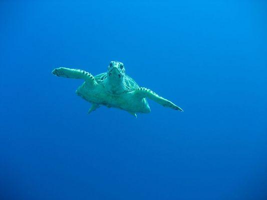 Mr. Schildkröte