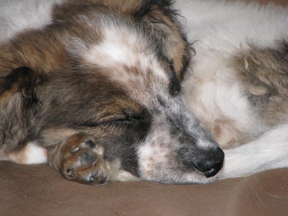 Mr Schmidt beim Schlafen :)