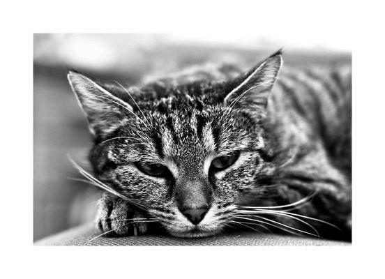 *mr.coolcat*