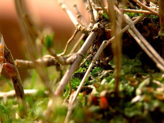 Mrein kleiner Zauberwald I