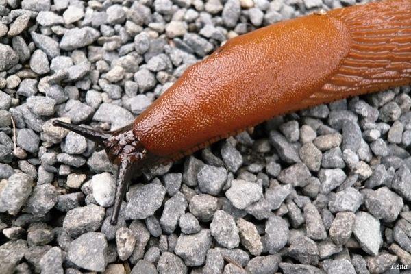 Mr.Slug