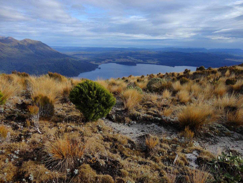 Mt. Te Kinga