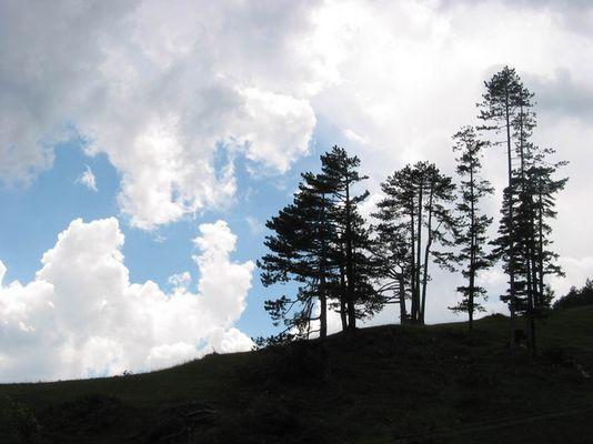 Mt. Zlatibor landscape, Serbia