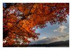 Mt.FUJI-4 [autumn]