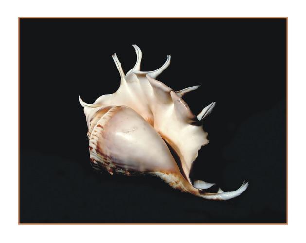 mu shell