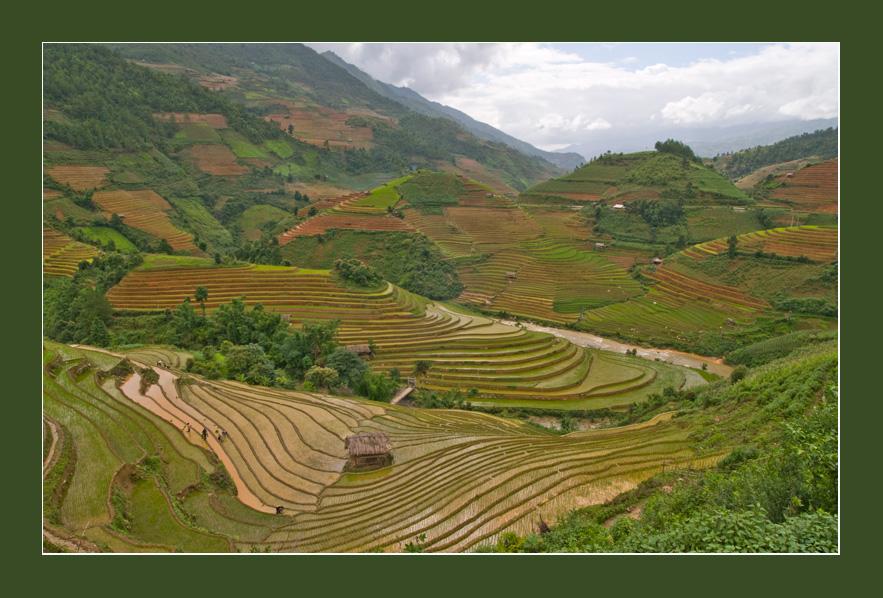 MUCANGCHAI - Vietnam