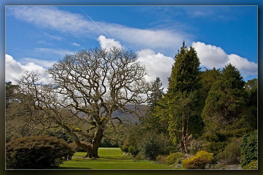 Muckross-Garden
