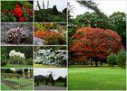Muckross House Garden